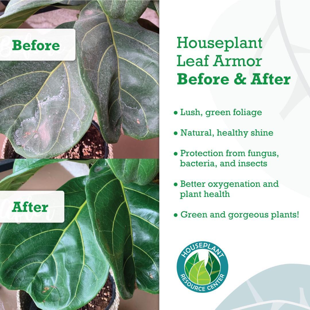 Houseplant-Leaf-Armor-6