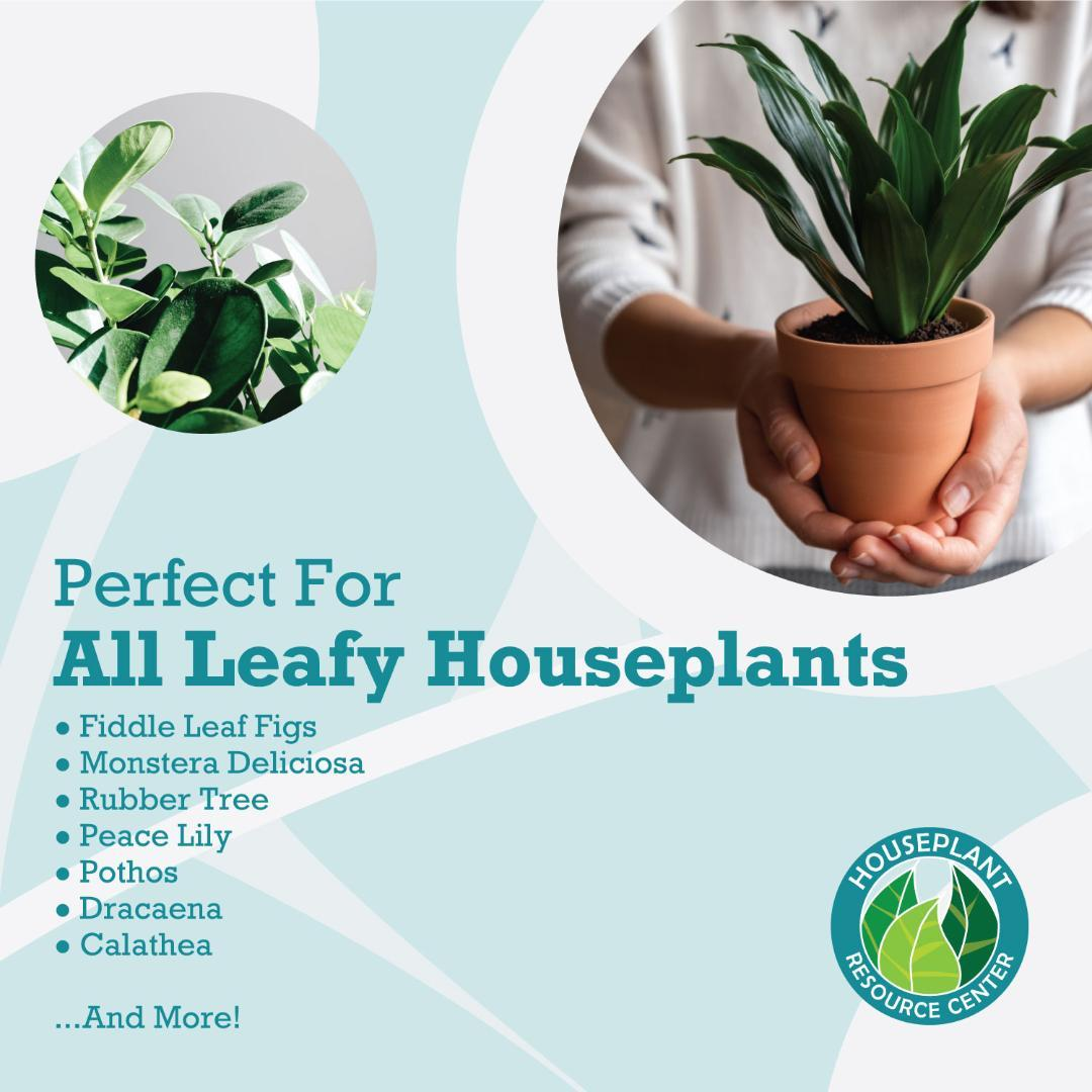 Houseplant-Leaf-Armor-8