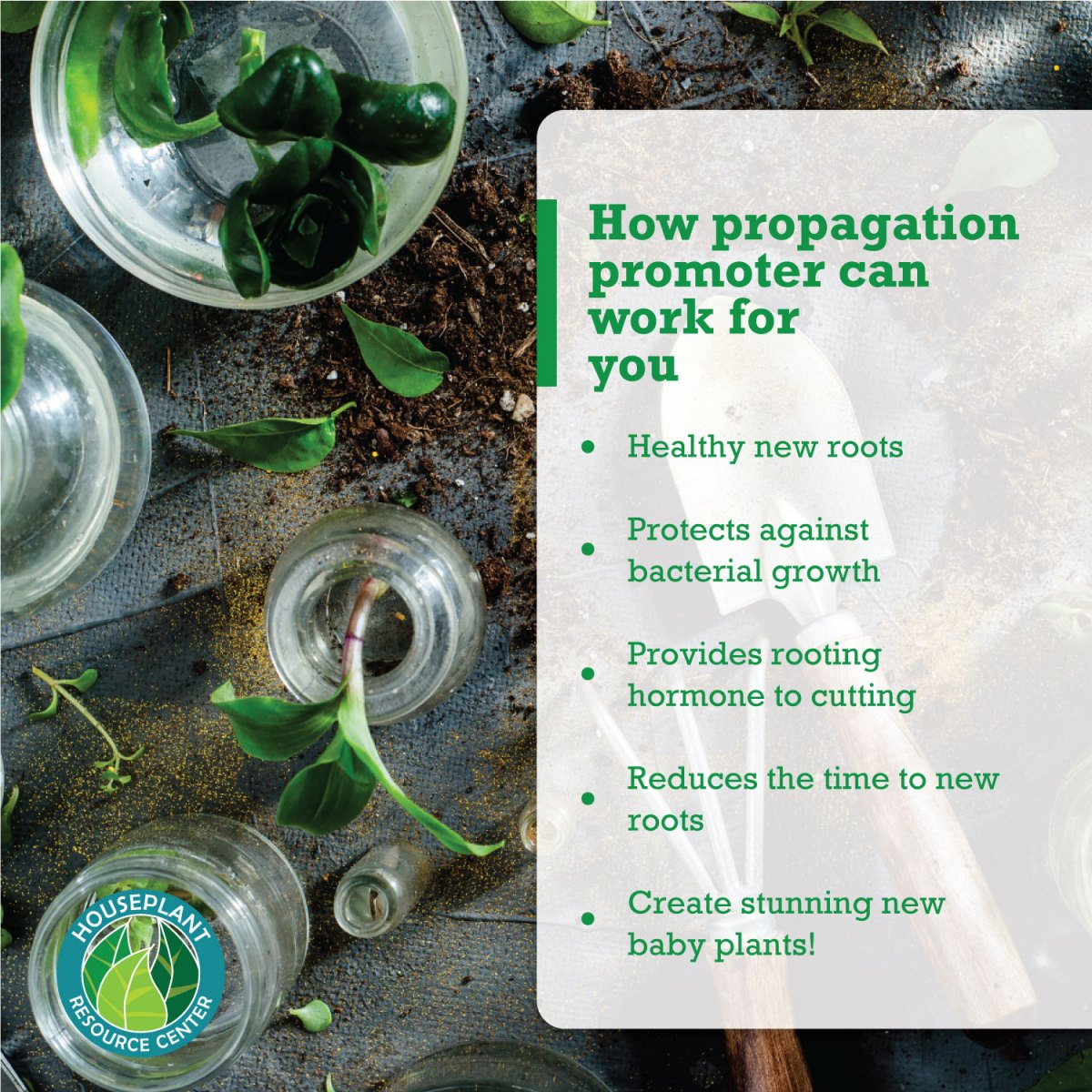 how-propagation-promoter