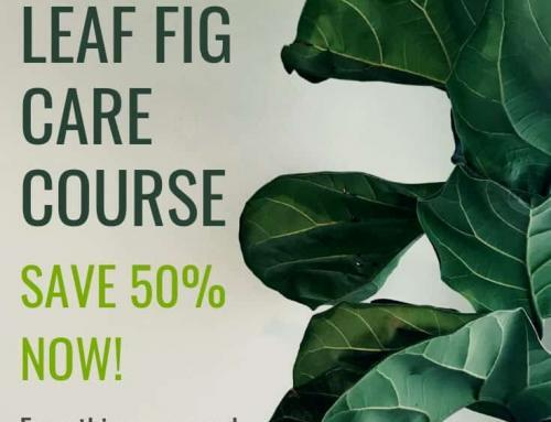 Save 50% on The Fiddle Leaf Fig Course (Coupon Code)