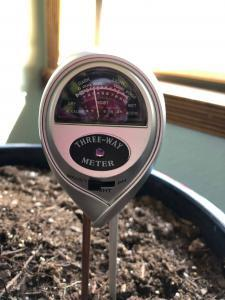 Using a moisture meter to know when to water your fiddle leaf fig plant can save you a lot of headaches and keep your plant healthy. For fiddle leaf fig owners who want to be totally confident in watering their plant, a moisture meter is a fantastic tool. Claire Akin
