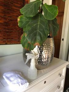 Fiddle leaf fig trees consume light and carbon dioxide to live and when their leaves are covered in dust, they can't get enough of either. Over time, if your tree is covered in dust, it will stop growing and eventually die. Claire Akin