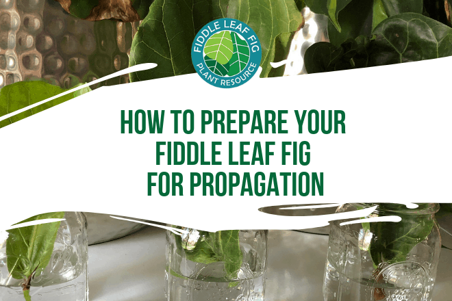 The best time to propagate your plant is in the spring when your plant is naturally growing and there's plenty of light available. Here's your step-by-step guide!