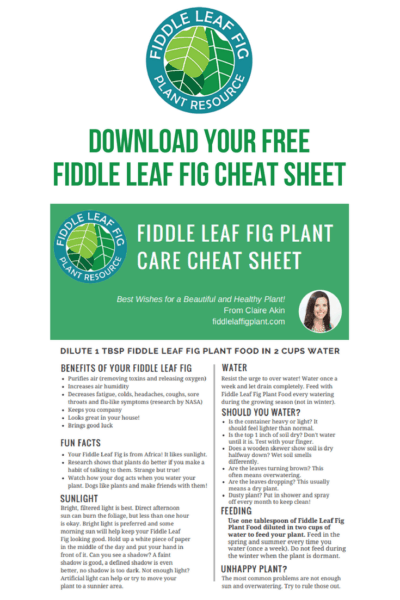 Download Your Free Fiddle Leaf Fig Cheat Sheet