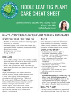 Fiddle Leaf Fig Cheat Sheet
