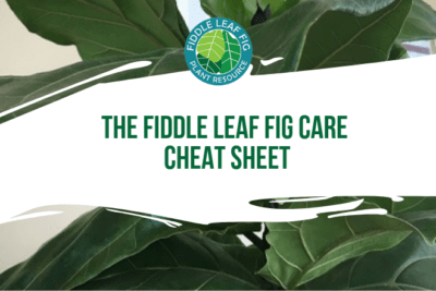 Whether your plant has been getting too much or too little water, has brown spots, isn't growing, or looks sick, we can help! Download your free Fiddle Leaf Fig Care Cheat Sheet to get started today.
