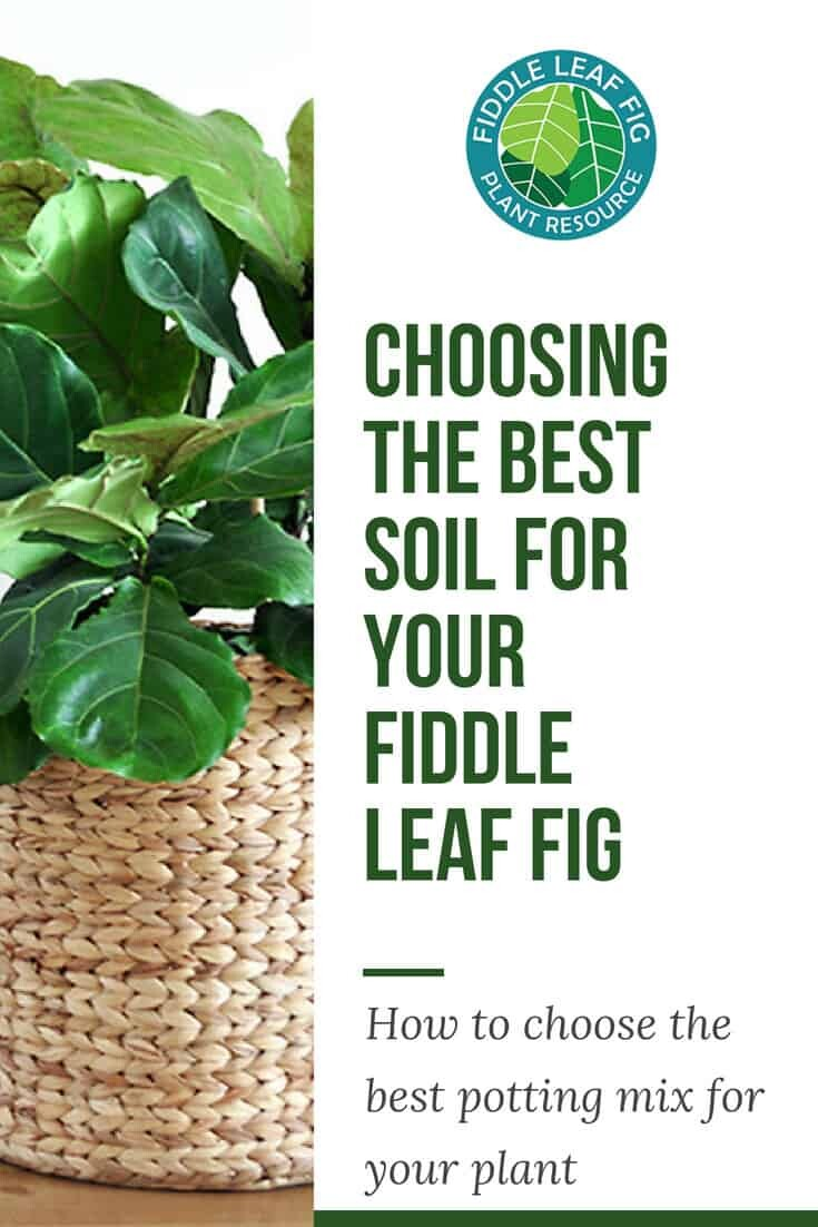 Choosing the Best Soil for Your Fiddle Leaf Fig