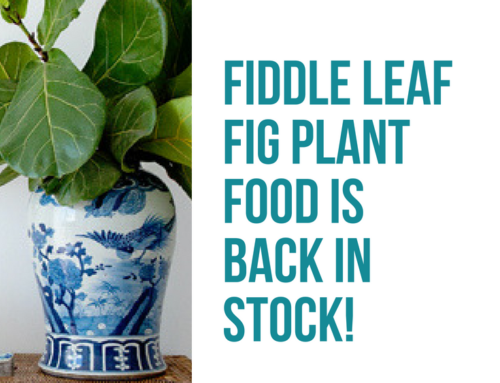 Fiddle Leaf Fig Plant Food is Back in Stock! (Order Now)