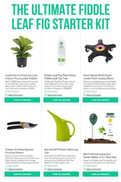 Fiddle Leaf Fig Kit