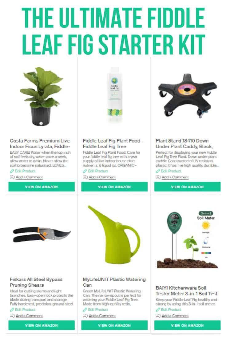 Fiddle Leaf Fig Kit