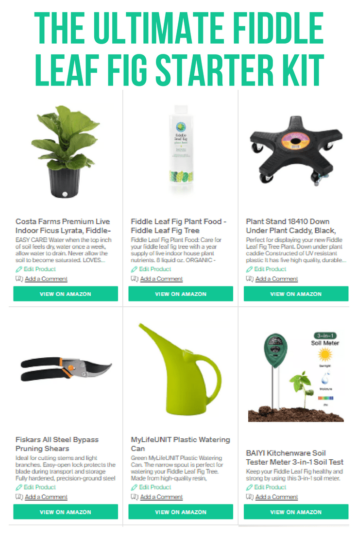 The Ultimate Fiddle Leaf Fig Starter Kit