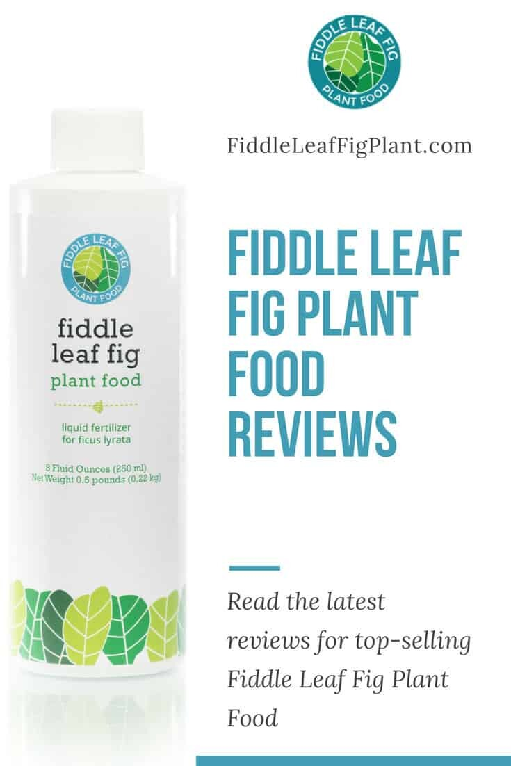 Fiddle Leaf Fig Plant Food Reviews