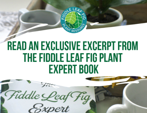 Read an Exclusive Excerpt from The Fiddle Leaf Fig Expert Book