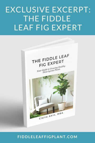 TheFiddleLeafFigExpert