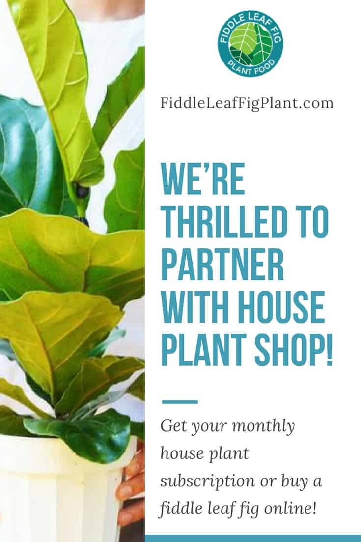 Weu2019re Thrilled to Partner with House Plant Shop