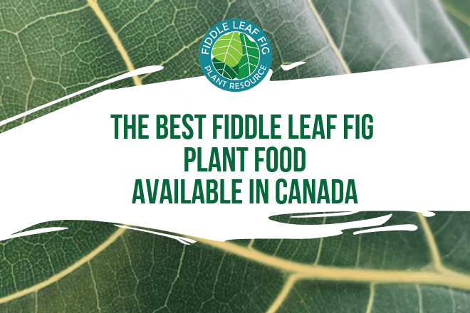 This formula provides a suitable formula for Fiddle Leaf Fig Plants. Be sure to follow the directions to properly dilute the formula!