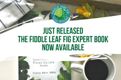 The Fiddle Leaf Fig Expert is an easy-to-understand guide for growing healthy and plants. It's available on Amazon in paperback or Kindle now!
