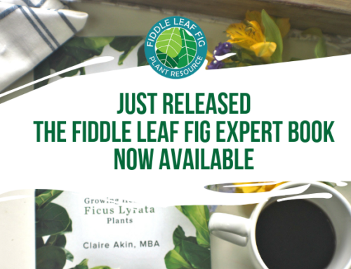 Just Released: The Fiddle Leaf Fig Expert is Available Now! (Buy Now)