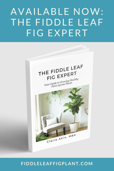 The Fiddle Leaf Fig Expert is Available Now!