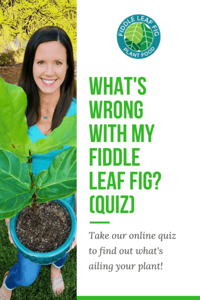 What's Wrong With My Fiddle Leaf Fig?