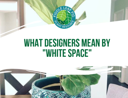 "What Designers Mean by ""White Space"" (And How the Fiddle Leaf Fig Perfectly Exemplifies This Interior Decorating Trick)"