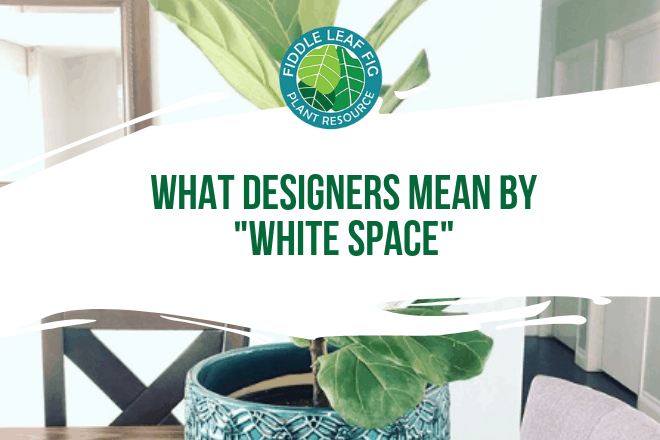 Why is the fiddle leaf fig the favorite of designers? What makes the fiddle leaf fig tree so popular for designers and decorators is negative space.