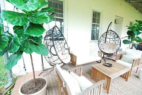 creative places to put a fiddle leaf fig plant outdoors
