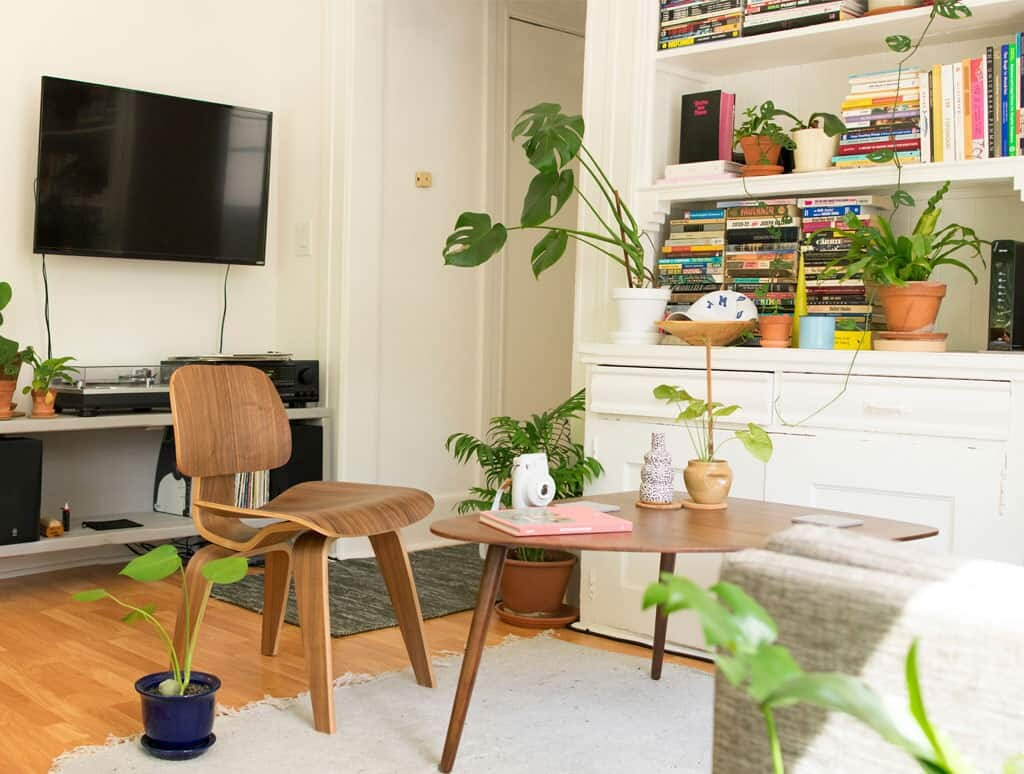 What Designers Mean by White Space Fiddle Leaf Fig Plant Resource