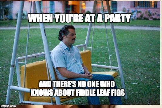Fiddle Leaf Fig Meme #1