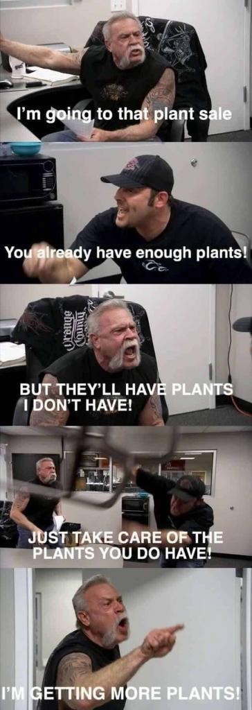 Fiddle Leaf Fig Meme #2