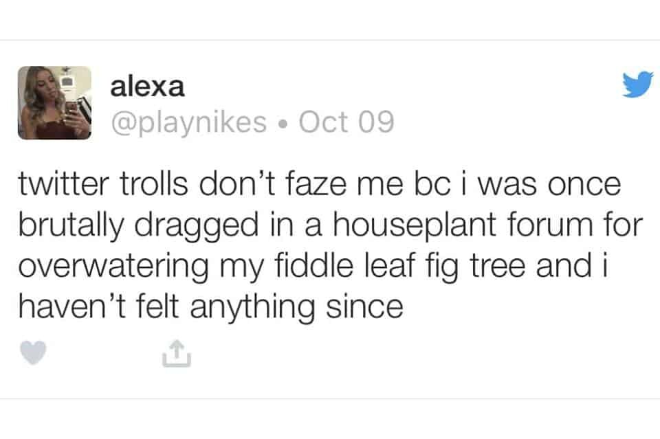 Fiddle Leaf Fig Meme
