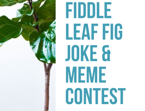 Fiddle Leaf Fig Meme Contest: Upload Yours & Vote for Your Favorite!