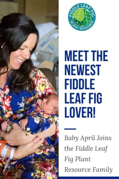 Introducing the Newest Fiddle Leaf Fig Lover Baby Photos
