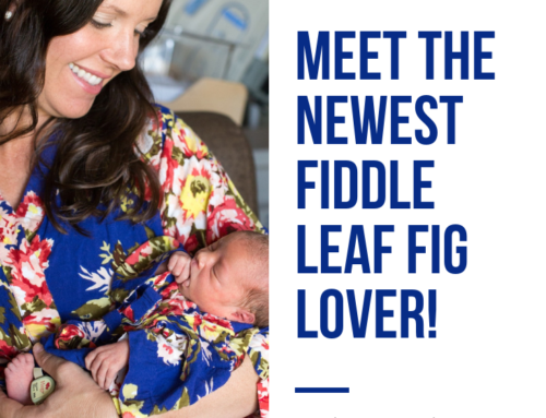 Introducing the Newest Fiddle Leaf Fig Lover! (Video)