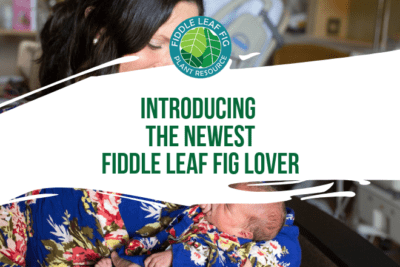 Thanks for being a part of the Fiddle Leaf Fig Plant Resource Family! We are thrilled to welcome the newest member of our little family, April Fern Akin.
