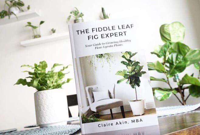 The Fiddle Leaf Fig Expert