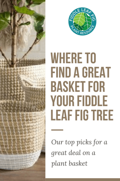 Where to Find a Great Basket for Your Fiddle Leaf Fig Tree