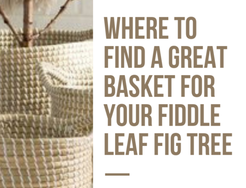 Where to Find the Best Basket for a Fiddle Leaf Fig Tree