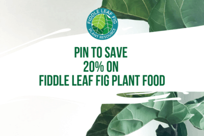 Looking for a fiddle leaf fig plant food coupon code? Share our webinar now and get your coupon code to save 20% on Fiddle Leaf Fig Plant Food.