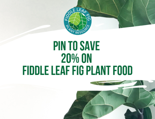 Pin Our Webinar to Save 20% on Fiddle Leaf Fig Plant Food (Coupon Code)