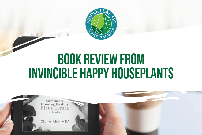 Fiddle Leaf Fig Expert Book review by Invincible Happy Houseplants founder, Boris Dadvisard. Click to read what is inside The Fiddle Leaf Fig Expert Book.