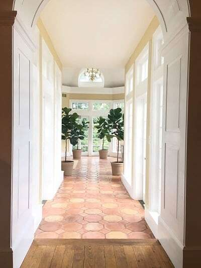How fast do fiddle leaf fig tress grow is a common question here at The Fiddle Leaf Fig Plant Resource. Click to view a full photo timeline. Claire Akin