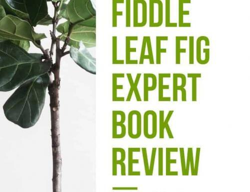 Indoor Plant Book Review from Invincible Happy Houseplants: The Fiddle Leaf Fig Expert