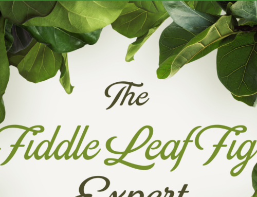 The Fiddle Leaf Fig Book Has a New Cover and a Lower Price!
