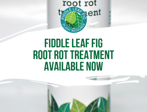 Our Root Rot Treatment Is Available Now! (Try Now)