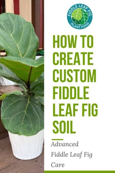 How to Create Custom Fiddle Leaf Fig Soil