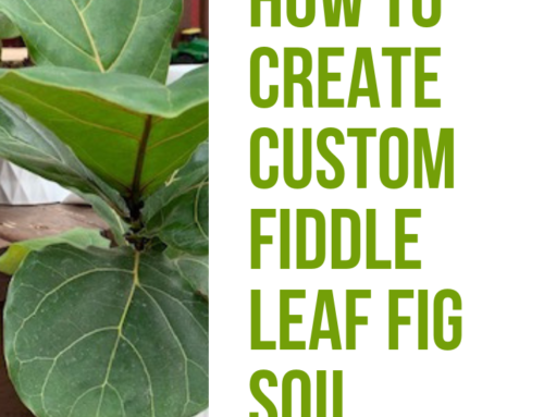 Advanced Fiddle Care: How to Create Custom Fiddle Leaf Fig Soil