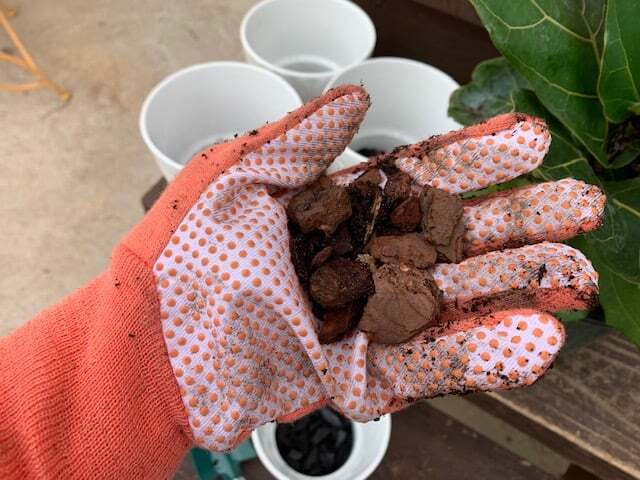 Are you an expert fiddle leaf fig grower? Click to learn how to create your own custom fiddle leaf fig soil to keep your tree healthy, green, and gorgeous.