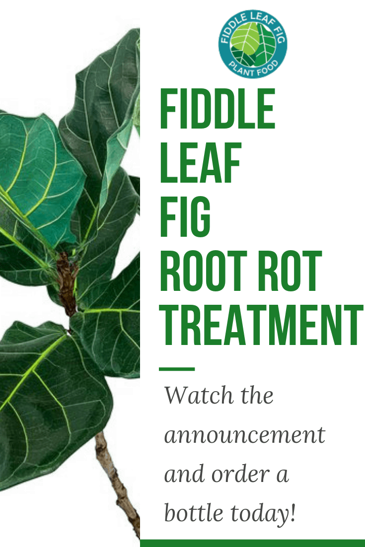 Root Rot Treatment