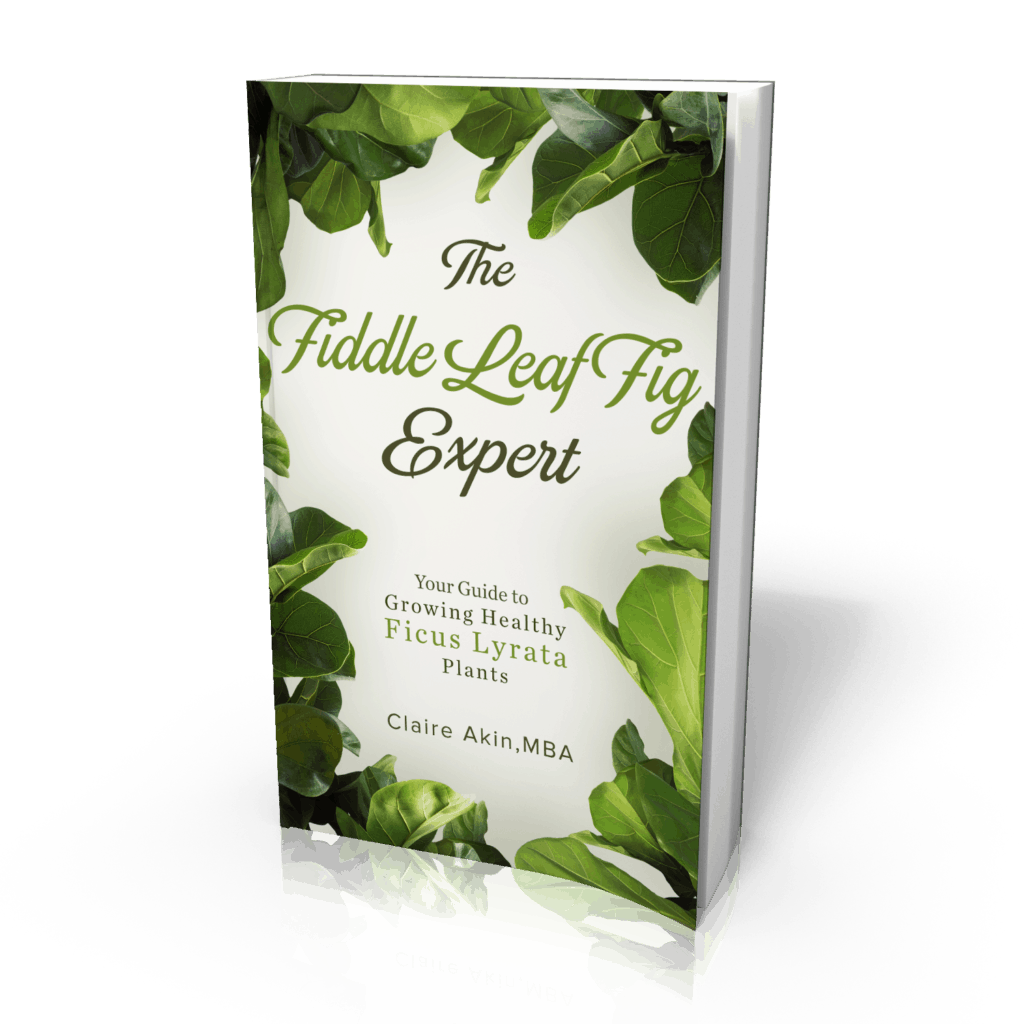 The Fiddle Leaf Fig Book has a new cover and a lower price. Click to see the brand new cover for The Fiddle Leaf Fig Book and the new price. Claire Akin